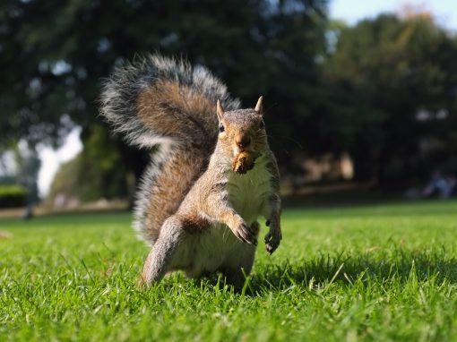 Mammal Pest Control