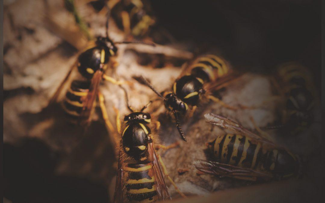 A.C.D Pest Control Website Updated